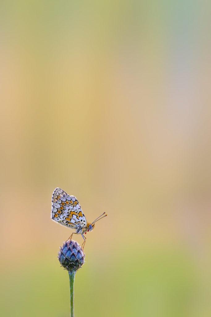 Papillon - Macrophotographie